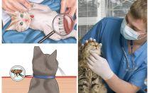 كيفية التخلص من البراغيث في قطة أو قطة في المنزل
