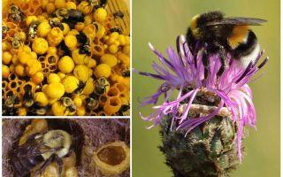 هل للعسل نحل