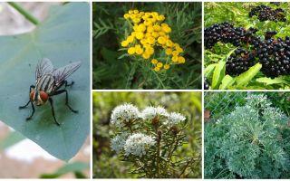 ما هي رائحة الذباب الخائف والبعوض