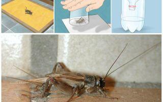 كيفية سحب الصراصير من شقة أو منزل