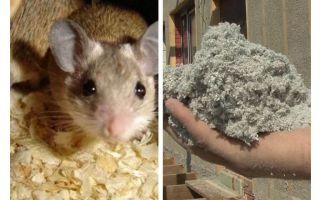 أي نوع من العزل لا تأكل الفئران