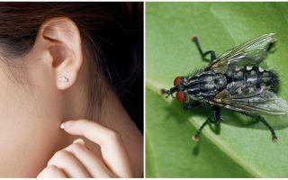 كيفية الحصول على ذبابة من أذنك في المنزل