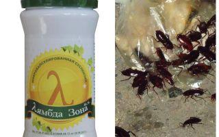 امدا دقق علاج للصراصير