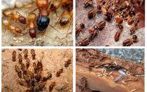 من هم النمل الأبيض