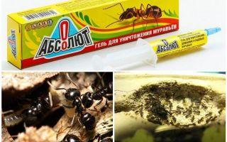 مطلق من النمل