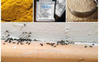 الأموال من النمل في المنزل في البلاد