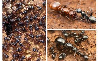 مراحل تطور النمل