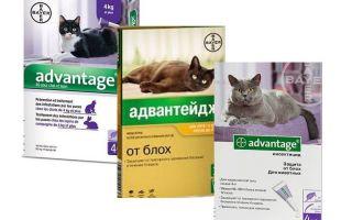 ميزة قطرات برغوث للقطط