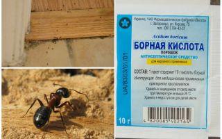 كيفية إزالة النمل من منزل خشبي