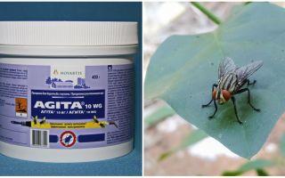 استخدام Agita من الذباب