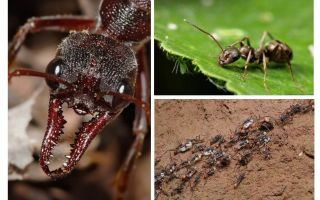 كل شيء عن النمل