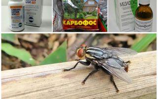 ما هي gadflies و gadflies خائفون من استعراض الأموال