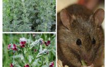 العلاجات الشعبية للفئران