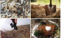 كيفية الحصول على النمل من العلاجات الشعبية الحديقة