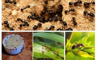 ما النمل خائفون من