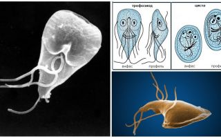 أمراض اللثة عند البالغين - الأعراض والعلاج