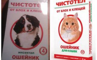 طوق بقرة البرغوث للقطط والكلاب