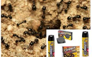 النمل مكافحة المعالجات