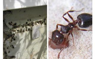 النمل يعيش في العزل