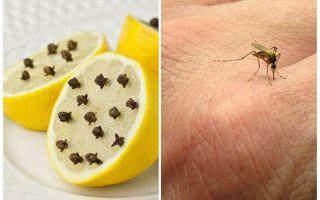 الليمون مع فصوص البعوض للأطفال والكبار