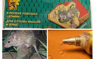 الغراء من الفئران