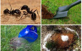 كيفية التخلص من النمل في العلاجات الشعبية الحديقة