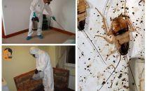 إبادة الصراصير في الشقة