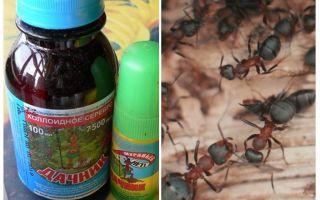 يعني الصيف مقيم من النمل