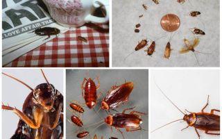 كيفية التخلص نهائيا من الصراصير في النزل