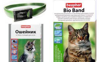 طوق Beafar من البراغيث للقطط والكلاب