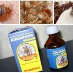 علاج Cucaracha للبق البقري -1