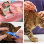 قواعد العلاج الحيوان
