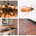 الصراصير في المنزل
