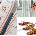 البرد ضد الصراصير