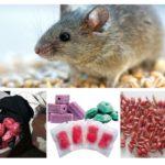 أشكال سم الفئران