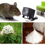 طرق التعامل مع الفئران