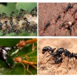 النمل الحياة