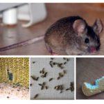 وجود الفئران في الشقة