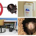 تثبيت مبيد من الفئران