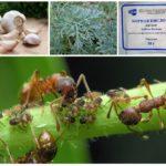 النباتات في مكافحة الحشرات