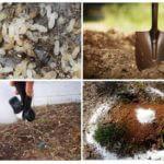 طرق التحكم في النمل