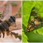 الذبابة و gadfly