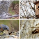 الطرق البيولوجية لمكافحة اليرقات