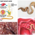 دورة حياة تطوير سلسلة الثور